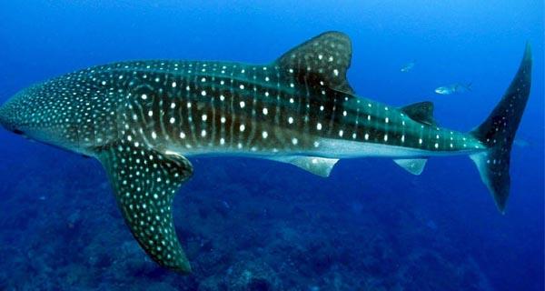 Top 10 Heaviest Animals In The World